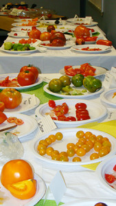 A tomato-tasting program proved to be a favorite community event at the Fairfield Woods seed library, bringing together about 45 people to see, taste, and discuss the different tomato varieties.