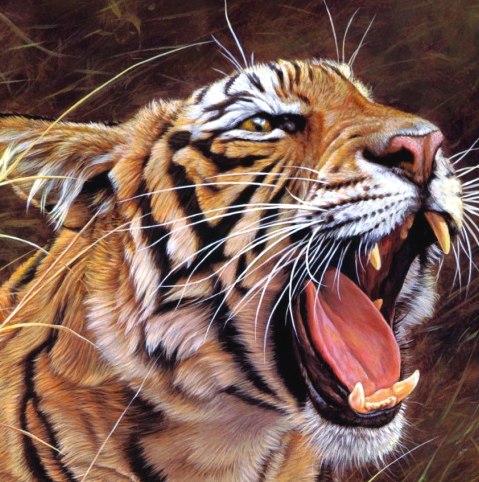 TigerPredatorEcontent.jpg
