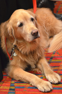 Ginger the therapy dog makes an appearance at AASL. Photo by Keith Johnston