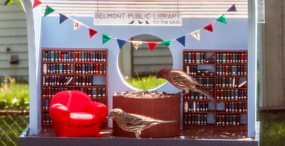 Avian patrons at the Belmont Public Library for the Birds