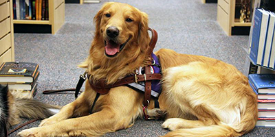 Service dog in library