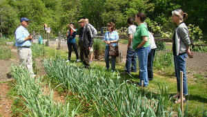 At the Fairfield Woods branch in Connecticut, library volunteer Eric Frisk gives a lesson in the library's community garden plot.