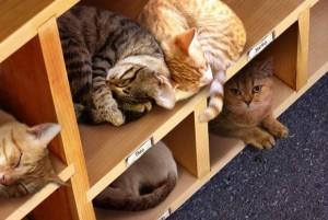 "Sacramento Public Library announced that the Library of Things had evolved into a new Library of Cats, with apparently a lengthy borrowing period: ""Patrons can now borrow a kitten and return a cat."""