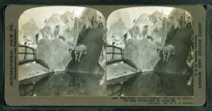 """Trained elephant """"shooting the chutes"""" at Hagenbeck's Animal Circus and Zoological Paradise, 1904 World's Fair, St. Louis."""