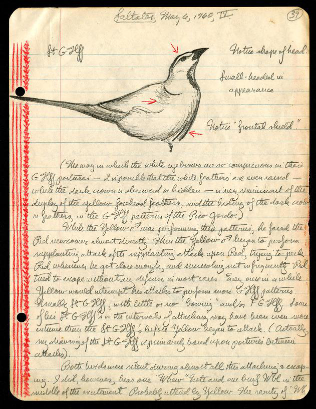 Page 39 documenting Martin H. Moynihan's study of birds on May 6, 1960. The page is from field notes on Saltator (birds), Frijoles and Barro Colorado Island, Panama, 1962. Moynihan (1928–1996) was a world authority on animal behavior, with major contributions to the study of communication in birds, primates, and cephalopods.