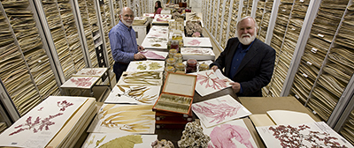 The Botany Department Herbarium at the Smithsonian Institution's National Museum of Natural History, displaying algae specimens, including coraline algae, wet specimens and the usual herbarium sheets. Featured researchers: Dr. James Norris (right, front), his research assistant Bob Sims (left, front), and associate researcher, Katie Norris (left, back)