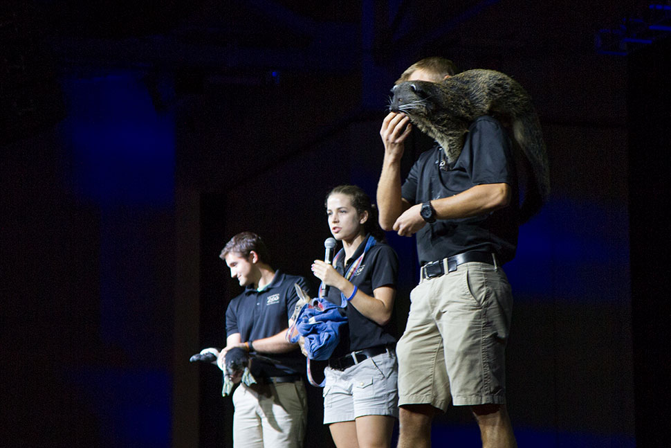 Three animal ambassadors (and their handlers) represented the Columbus Zoo and Aquarium. From left, a penguin, a kangaroo joey, and a bearcat.