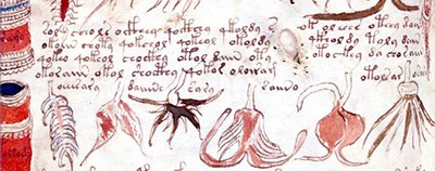 Images and text from the Voynich manuscript
