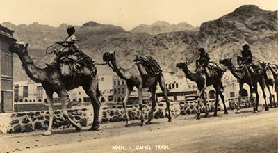 Postcard (1920s?) showing camel train in Aden Protectorate