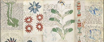Collage of pages from the Voynich manuscript