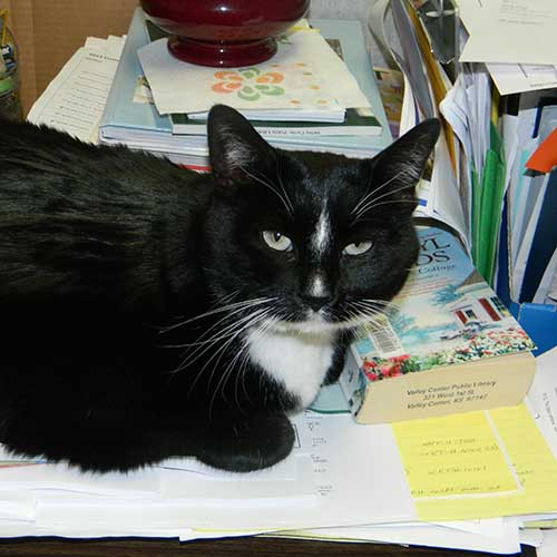 thesis for the black cat Starting an essay on edgar allan poe's the black cat organize your thoughts and more at our handy-dandy shmoop writing lab.