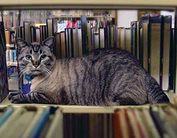 Browser, the live-in cat of White Settlement (Tex.) Public Library, ­survived a city council vote to remove him.