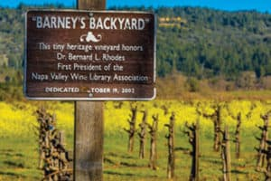 "Barney's Backyard is the 91-vine working vineyard behind the St. Helena (Calif.) Public Library. <span class=""credit"">Photo: Tim Kennedy/Napa Films</span>"
