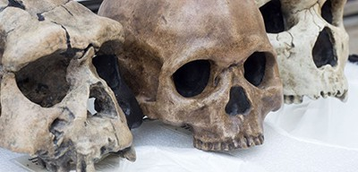 Skull replicas can be checked out at Lititz (Pa.) Public Library