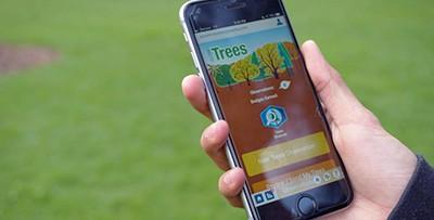 Help NASA measure trees