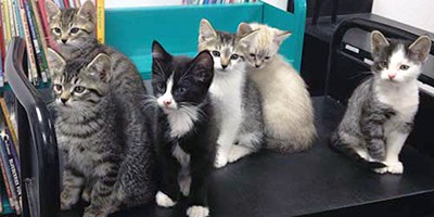 Kittens of library cat Carmen, Asotin County Library, Clarkston, Washington