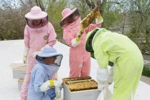 The BeeChicas tend to one of two rooftop beehives at Boulder (Colo.) Public Library. (Photo: The Bee Chicas)