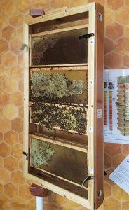 Observation hive in Niskayuna (N.Y.) High School's media center. (Photo: Paul Scott)