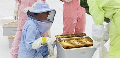 The BeeChicas tend to one of two rooftop beehives at Boulder (Colo.) Public Library