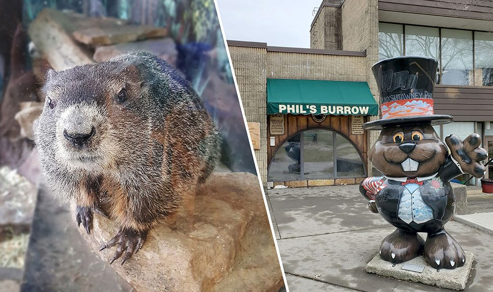 From left: Punxsutawney Phil, 134 years old and living at the Punxsutawney (Pa.) Memorial Library since the 1970s, inside his burrow; at the front of the library, visitors can see Phil's Burrow through the viewing window. Photos: Punxsutawney (Pa.) Memorial Library