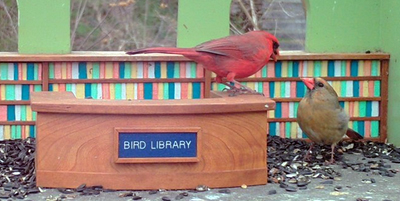 Patron interaction at The Library for Birds
