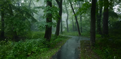 Relaxing Walk in the Rain, Umbrella and Nature Sounds for Sleep and Relaxation