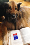 Aragon dreams of starting a business selling dog treats, tennis balls, and fire hydrants. He checked out The E-Myth Enterprise: How to Turn a Great Idea into a Thriving Business by Michael E. Gerber with his library card