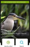 Audubon Bird app