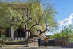 Arizona State University's Hayden Library