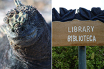 Galapagos tortoise and library/biblioteca wooden sign