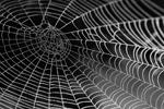 Spider web (Photo: Pexels)